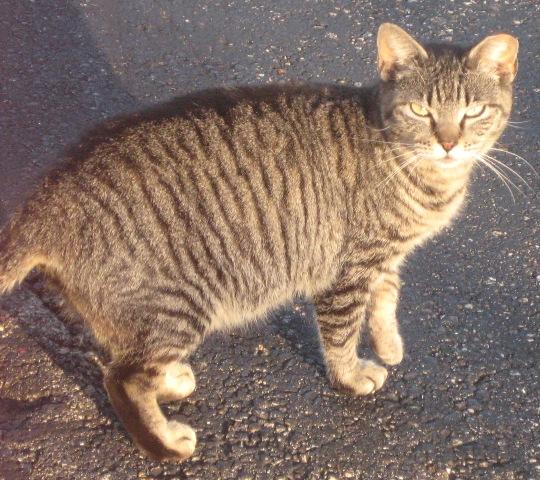 Waco Humane Society Cats