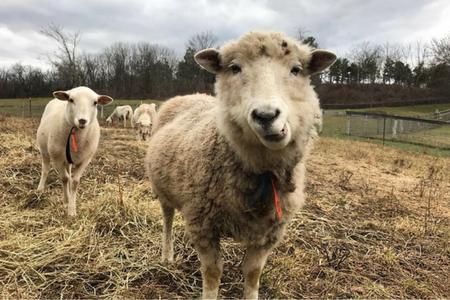 Catskill Animal Sanctuary - GuideStar Profile