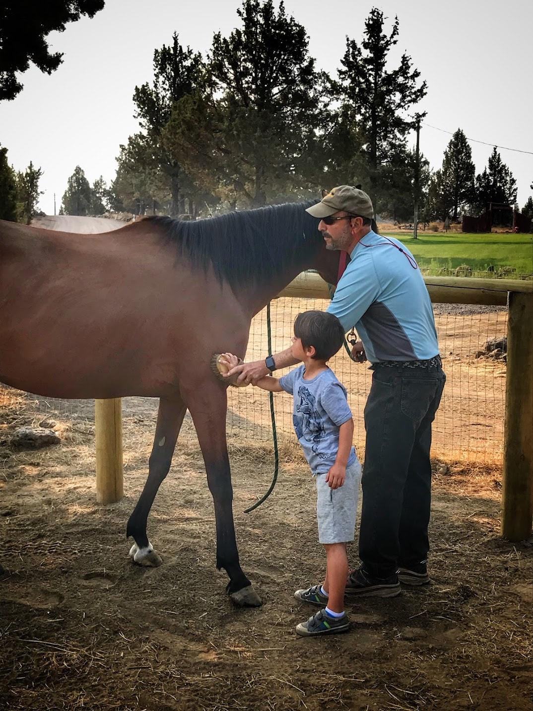 Equine Outreach Inc Guidestar Profile